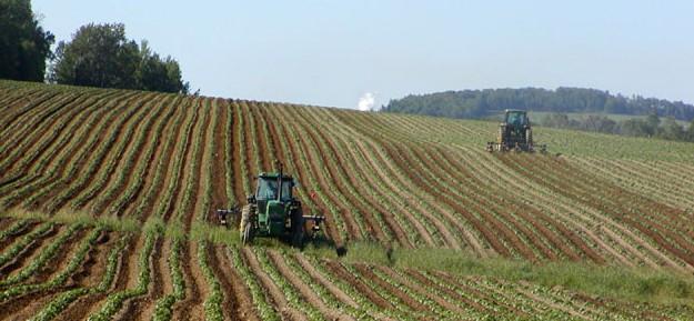 Landbruk - traktor - potet - åker